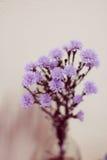 Flor roxa Imagem de Stock Royalty Free