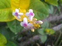 Flor roxa Imagens de Stock
