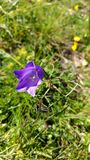 A flor roxa Imagens de Stock
