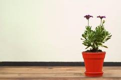 Flor roxa bonita no potenciômetro vermelho Imagem de Stock Royalty Free
