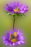 Flor roxa com insetos Fotos de Stock Royalty Free