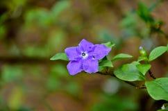 Flor roxa com licença e ramos verdes Foto de Stock Royalty Free