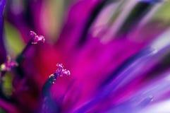 Flor roxa - composição abstrata das pétalas e dos estames Fotos de Stock Royalty Free