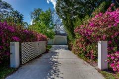 A flor roxa cor-de-rosa cobre o alinhamento da entrada de automóveis longa de ajardinar de acolhimento da entrada da rua fotografia de stock royalty free