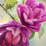 Flor roxa da íris Fotografia de Stock