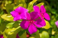 Flor roxa da cor imagens de stock
