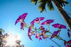 Flor roxa da orquídea imagens de stock