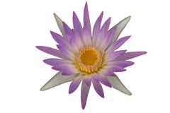 Flor roxa do lírio de água ou flor de lótus isolada no fundo branco Fotografia de Stock