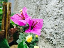 A flor roxa está florescendo na luz do dia imagens de stock