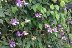 Flor roxa, flores foto de stock royalty free