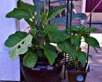 Flor roxa na planta verde no patamar fotografia de stock