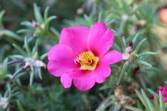 Flor roxa no jardim da cidade Fotografia de Stock