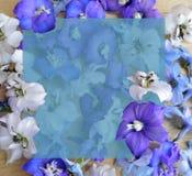 Flor, roxo, mola, natureza, roxo, flores, azul, planta, florescendo, flor, floral, jardim, floral, branco, pétala, isolada, fotografia de stock royalty free