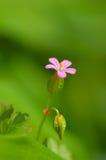 Flor rural rosada viva imagen de archivo libre de regalías