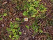 Flor só Fotos de Stock