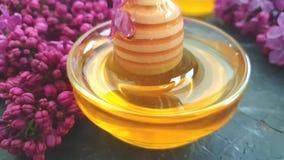 Flor sabroso de la flor de la lila de la miel en el fondo concreto negro, composición almacen de metraje de vídeo