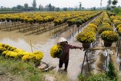 Flor Sadec, Vietname imagens de stock
