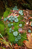 A flor sae no musgo e nas folhas de outono marrons Foto de Stock Royalty Free