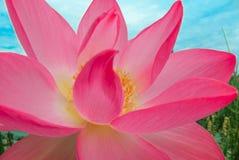 Flor sagrada imagen de archivo libre de regalías