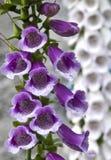 Flor salvaje Fotografía de archivo