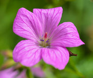 Flor salvaje Imágenes de archivo libres de regalías