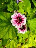 Flor salvaje Foto de archivo