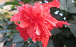 Flor salvaje imagen de archivo