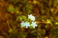 Flor salvaje Imagen de archivo libre de regalías