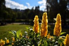 Flor salvaje amarilla Fotos de archivo libres de regalías