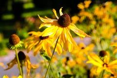 Flor salvaje amarilla Imágenes de archivo libres de regalías