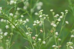 Flor salvaje blanca Imagenes de archivo