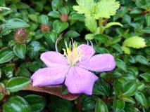 Flor salvaje con descensos de rocío Fotos de archivo