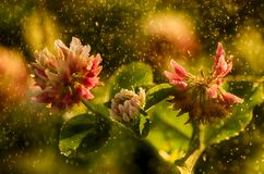 Flor salvaje, día soleado lluvioso, primavera Foto de archivo
