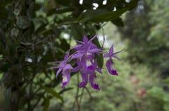 Flor salvaje de la orquídea Foto de archivo libre de regalías