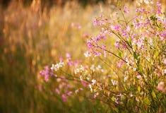 Flor salvaje del verano Foto de archivo
