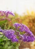 Flor salvaje del verano Imagen de archivo libre de regalías
