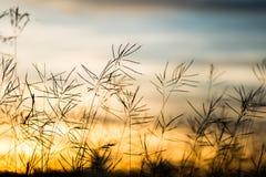 Flor salvaje del vintage en puesta del sol Imágenes de archivo libres de regalías