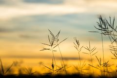 Flor salvaje del vintage en puesta del sol Imagen de archivo