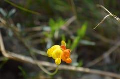 Flor salvaje en la visión macra Foto de archivo libre de regalías