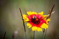 Flor salvaje en prado Imagen de archivo