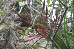 Flor salvaje exótica, Varadero, Cuba fotos de archivo