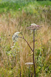Flor salvaje floreciente Fotos de archivo