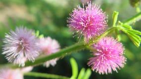 Flor salvaje hermosa en un arbusto Fotos de archivo libres de regalías