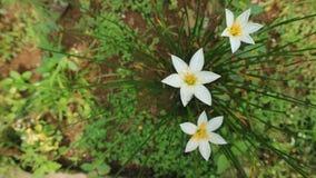 Flor salvaje indonesia fotos de archivo