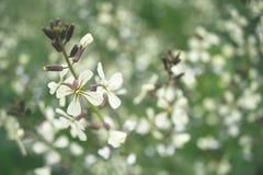 Flor salvaje unfocused Fotografía de archivo libre de regalías