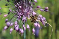 Flor salvaje y abeja Imagenes de archivo