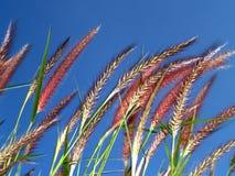 Flor seca 06 imagem de stock