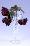 Flor seca Imagen de archivo libre de regalías