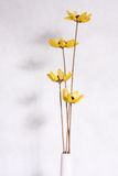 Flor seca Imagenes de archivo