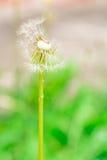 Flor seca Imágenes de archivo libres de regalías